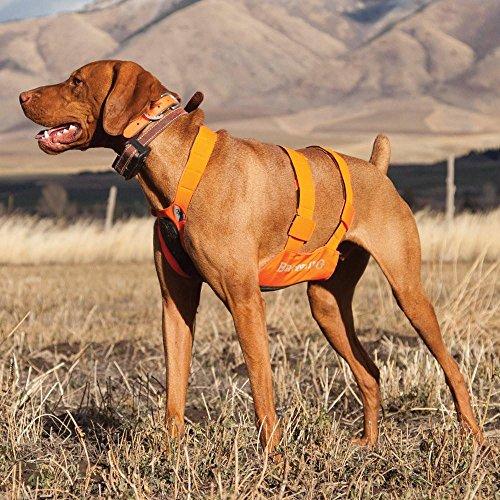 43dcfbcc69a9b Browning Dog Protection Vest Dog Hunting Vest, Safety Orange, - Import It  All