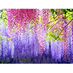 e-Joy-Realistic-Artificial-Silk-Wisteria-Vine-Ratta-Silk-Hanging-Flower-Plant-for-Home-Party-Wedding-Decor-and-Other-Various-Events-12-Pieces-36-Feet-Each-Light-Blue