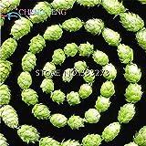 Free Ship 20 Pcs Hops. Humulus Lupulus Seeds Rare Beer Flower Plants Form Rhizomes 2016 Jardin New Bonsai Semente Plantas Sale