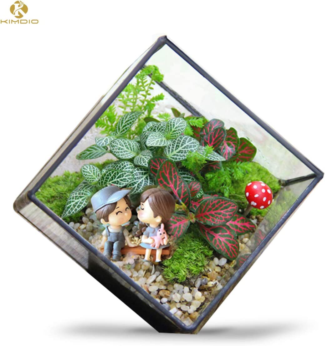 Kimdio Geometric Terrarium Clear Glass Tabletop Planter Air Plant Holder Display for Succulent Fern Moss Air Plants Holder Miniature Outdoor Fairy Garden DIY Gift Black-M