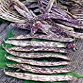 Dragon Langerie Bush Bean Seeds, 25+ Premium Heirloom Seeds, Exotic Colors & Fun Addition to Your Home Garden!, (Isla's Garden Seeds), Non GMO Organic, 90% Germination Rates, Highest Quality!