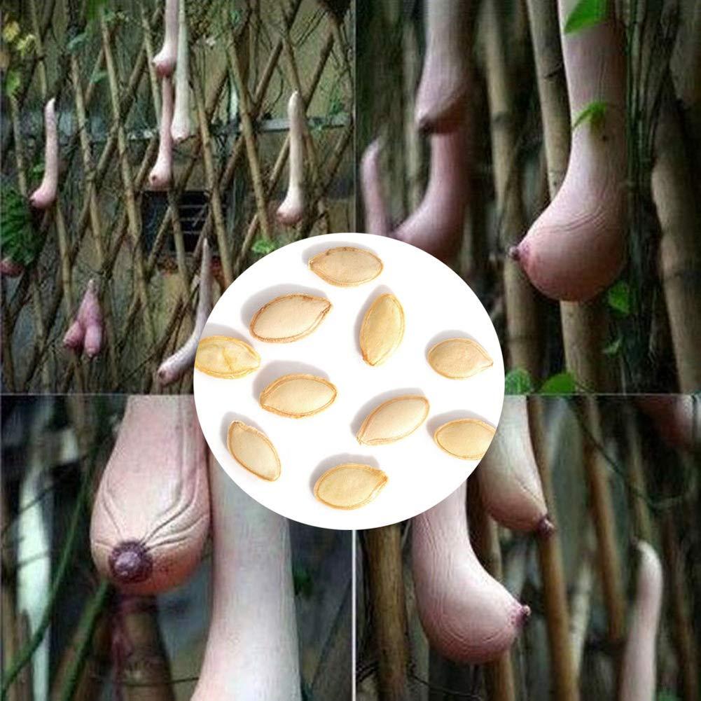 Kuizhiren1 Plant Seeds,Seeds for Home Garden Ornament Decoration,10Pcs Vietnam Milk Melon Breast-Shape Fruit Seeds Vegetables Bonsai Garden Plant