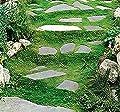 IRISH MOSS SEEDS, Sagina subulata, Heath Pearlwort, Perfect In Garden, Lawn Substitue or In-Between Stones, Groundcover Heath Pearlwort, Zones 4-10 - By MySeeds.Co