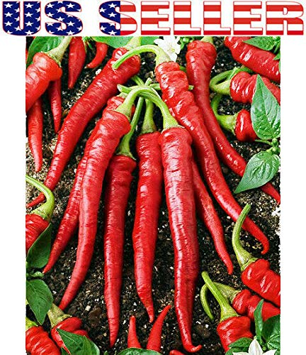 ASTONISH Seeds Package: 30+ Seeds - Cayenne Long Slim: 30+ Organically Grown Cayenne Long Slim Pepper Seeds Chili Hot Heirloom Non-GMO