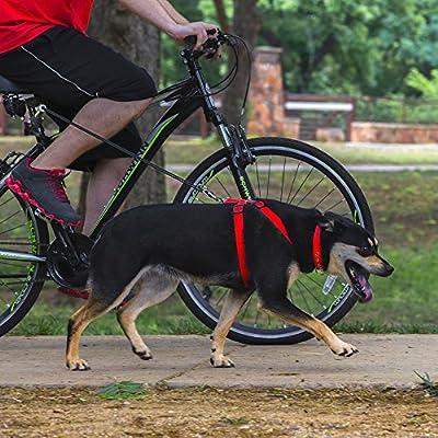 Head Tilt BIKE Leash Pet Leashes, One Size