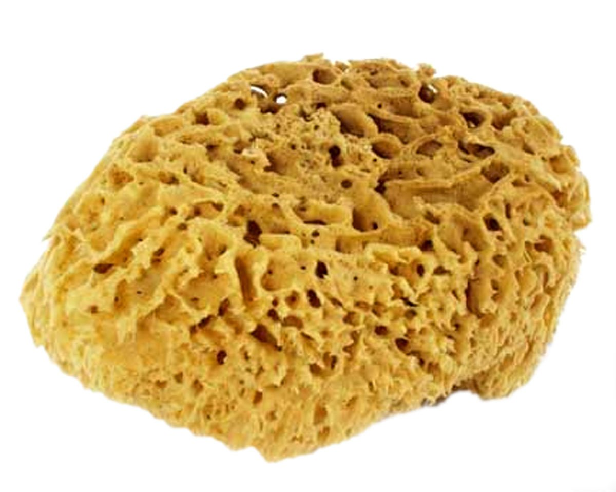 5-6 Inch Natural Sea Sponge For Bathing, Cleaning and Sponge Painting