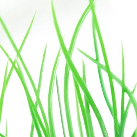 Amazon.com : Planta de Jardin plástico emulational decorativo hoja Larga Para el acuario, 20cm, Verde : Pet Supplies