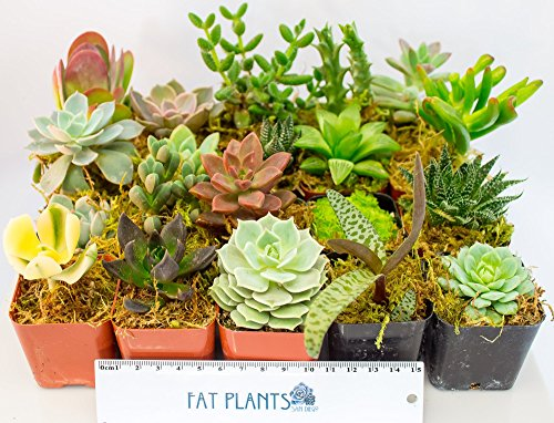 Fat Plants San Diego Succulent Plants (10)