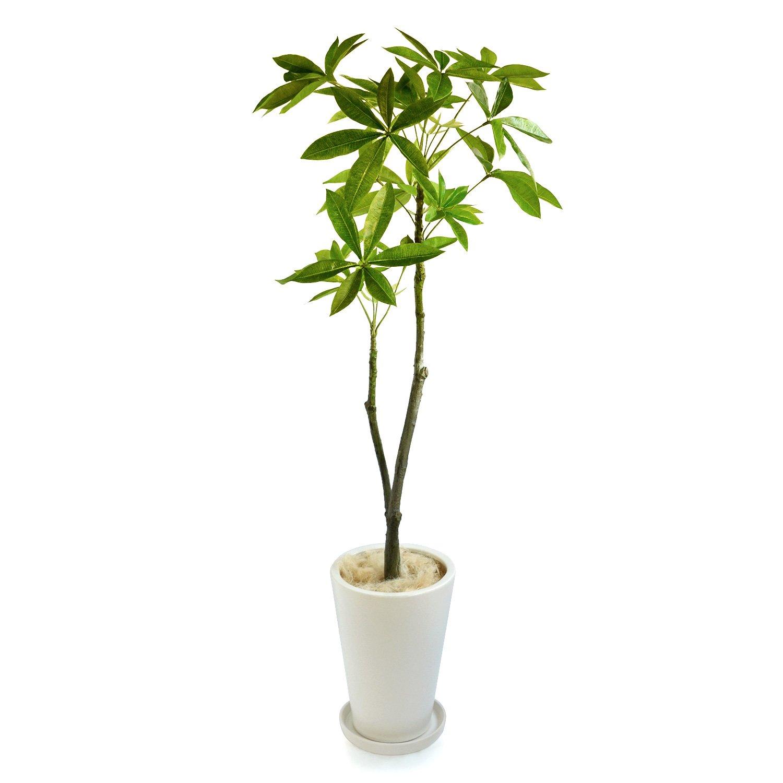 GREENPARK パキラ 皿付プランターL H35 ジュートファイバー 造花 フェイクグリーン B01N1K22CA