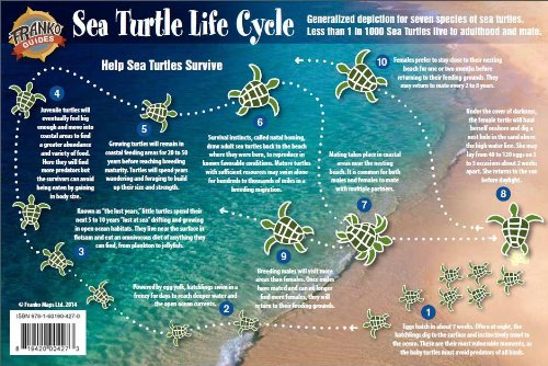 Sea Turtle Life Cycle Guide Laminated Card