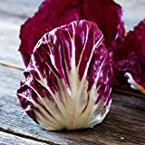 Radicchio Garden Seeds - Palla Rosa Variety - 4 oz - Heirloom Vegetable Gardening Seed - Grow Non-GMO Vegetables and Salad Greens