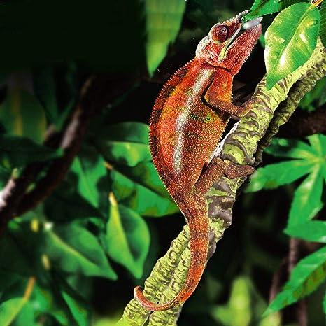 raspbery Reptil Escalada Vid Selva Artificial Selva Vides Curva Flexible Rama Reptil Terrario Jaula Caja Hábitat Decoración Accesorios para Lizard ...