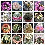 10 Mammillaria Mix seedsEasy Grow Care Free Cactus,Succulent CombSH C32