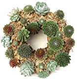 "15"" Sphagnum Moss Living Wreath Round, Natural-organic Original Plus Package of 50 Topiary Pins"