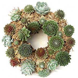"15"" Sphagnum Moss Living Wreath Round, Natural-organic Original Plus Package of 50 Topiary Pins 2"