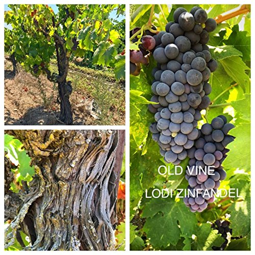 California Red Zinfandel Wine - 50 Pounds - Ultra Premium Zinfandel Grapes - California, Lodi AVA - WineGrapesDirect - Frozen Grape Must for Winemaking