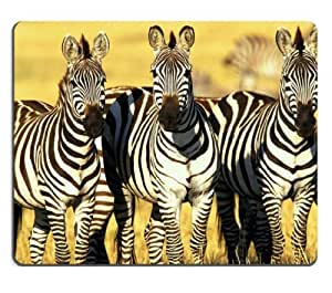 Animal Zebra Wildlife Africa Grassland Yellow Pattern Black White Group Mouse Pads Customized Made to Order Support Ready 9 7/8 Inch (250mm) X 7 7/8 Inch (200mm) X 1/16 Inch (2mm) High Quality Eco Friendly Cloth with Neoprene Rubber Lux Mouse Pad Desktop Mousepad Laptop Mousepads Comfortable Computer Mouse Mat Cute Gaming Mouse_pad