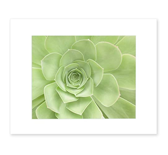 amazon green wall art green art print succulent flower