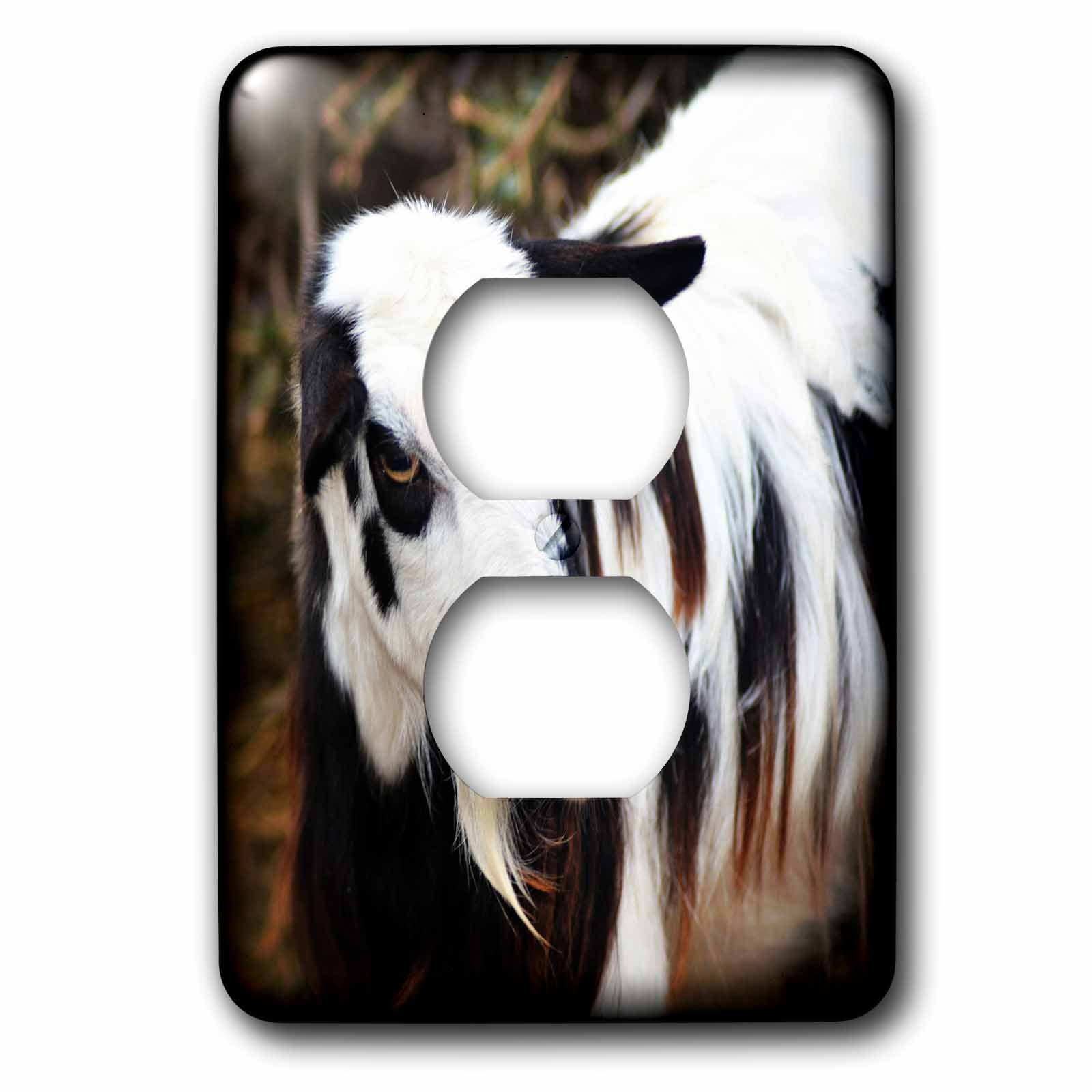 3dRose WhiteOaks Photography and Artwork - Goats - Long Hair Goat is a photo of a beautiful long haired goat - Light Switch Covers - 2 plug outlet cover (lsp_265334_6)
