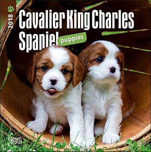 Cavalier King Charles Spaniel Puppies Mini Calendar 2018 - Deluxe Small Wall Calendar (7x7)