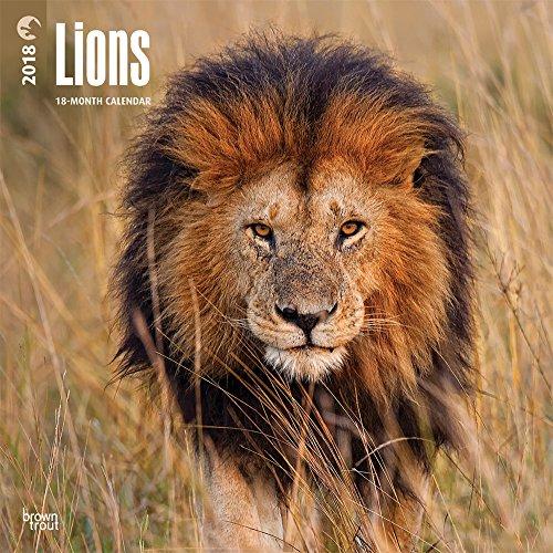 Lions 2018 Monhly Square Wall Calendar
