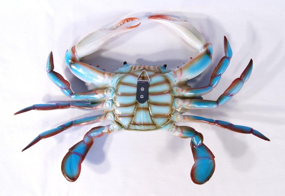amazon com large replica chesapeake bay blue crab wall decor