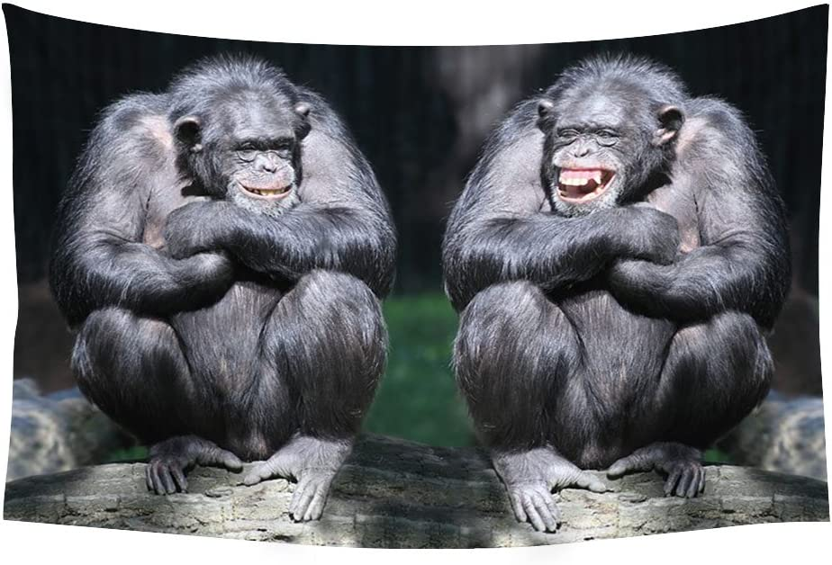 Amazon Com Chimpanzee Couple Cute Animals Monkey Funny Animals Wall Tapestry Art For Home Decor Wall Hanging Tapestry 90x60 Inches Home Kitchen,Bathroom Remodel Bathroom Floor Tile Ideas