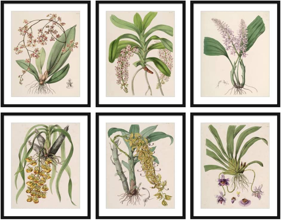 Set of 6 (8X10) Unframed Antique Botanical Print Set Beautiful Plants Illustration Home Decor Wall Art N034