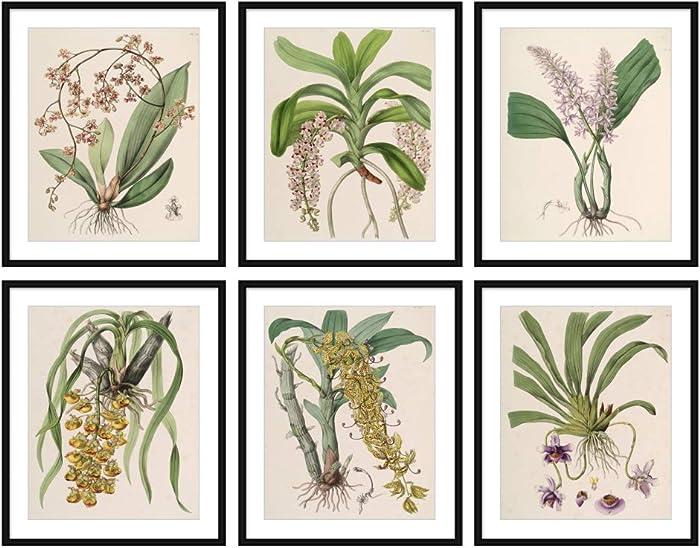 Set of 6 (8X10) Unframed Antique Botanical Print Set Beautiful Plants Illustration Home Decor Wall Art N034
