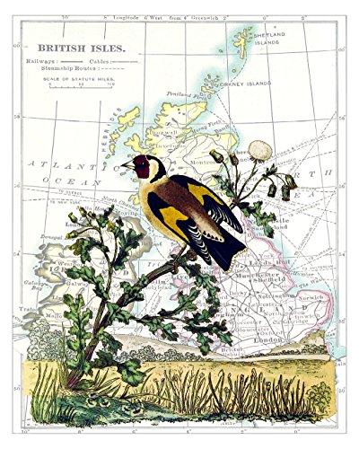Original Audubon Artwork - 4