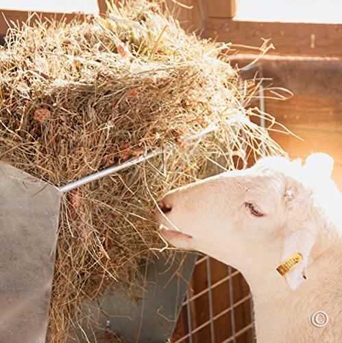 Grain/Hay Feeder by V-Med Supply (Image #2)