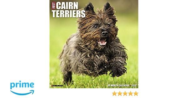 just cairn terriers 2019 wall calendar dog breed calendar willow