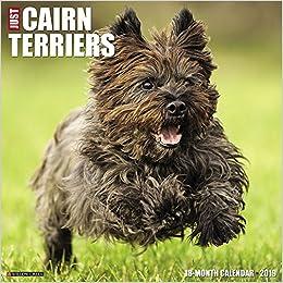 Just Cairn Terriers 2019 Wall Calendar Dog Breed Calendar Amazonde