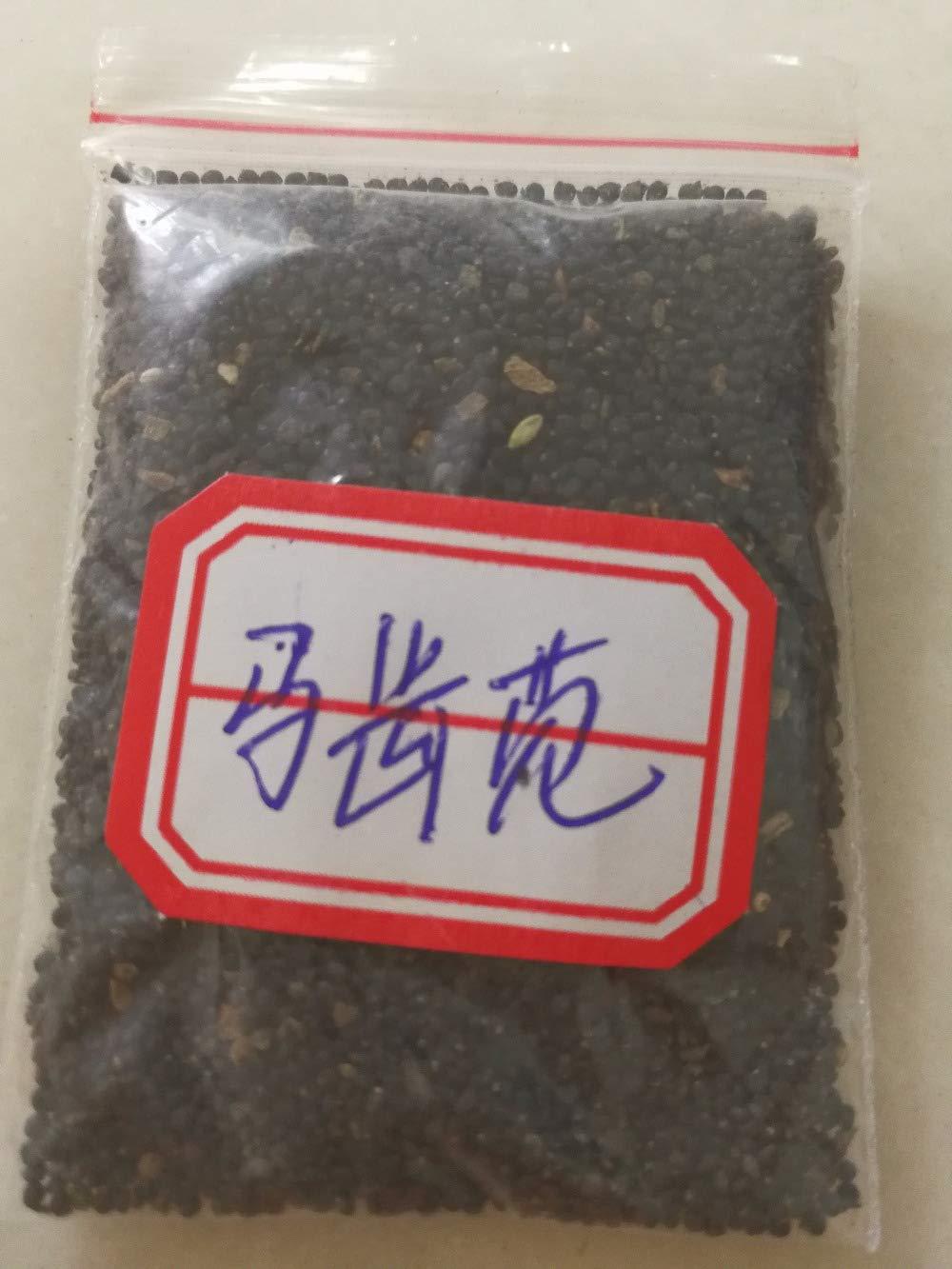 200pcs ing alimentaire Plentree Paquet de graines 5000pcs NON-OGM pourpier l/Ã/©gumes bio Bonsai 100/% authentique d/Ã/©licieux facile