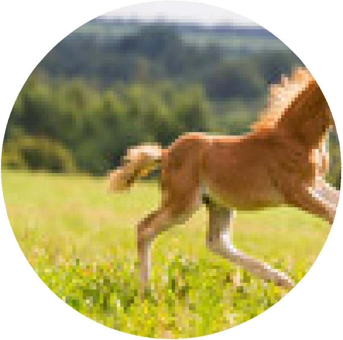alfombrilla de ratón Mini potro caballo Falabella: Amazon.es ...