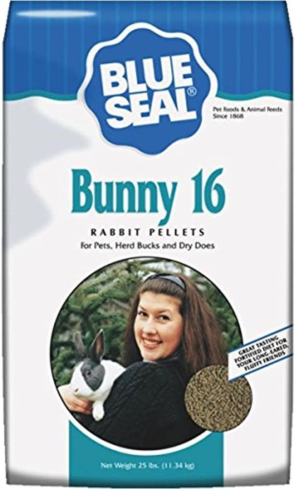 Blue Seal Bunny 16