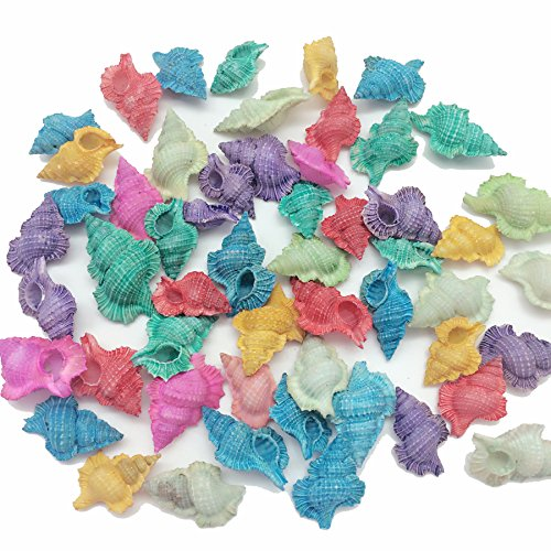 PEPPERLONELY 20PC Dyed Assorted Colors Baby Frog Sea Shells, 1-1/4 Inch ~ 1-3/4 Inch