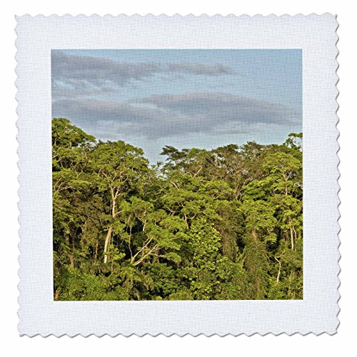 KIKE CALVO Rainforest Costa Rica Collection  - Tortuguero National Park - 12x12 inch quilt square (qs_234120_4)