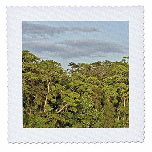 KIKE CALVO Rainforest Costa Rica Collection - Tortuguero National Park - 12x12 inch quilt square (qs_234120_4)