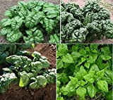 David's Garden Seeds Collection Set Spinach WR4532 (Multi) 4 Varieties 1200 Plus Seeds (Open Pollinated, Heirloom, Organic)