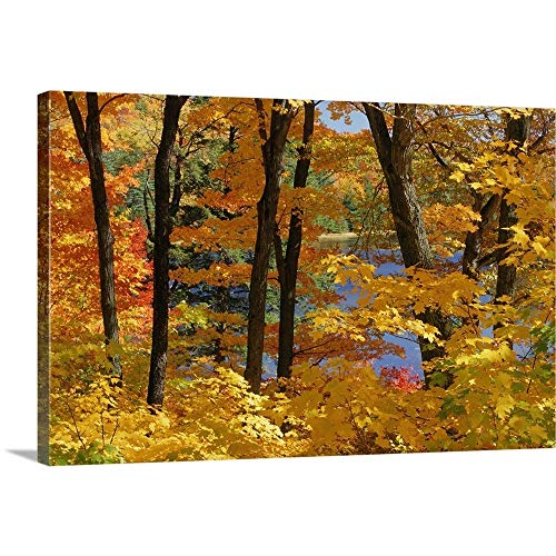 GREATBIGCANVAS Gallery-Wrapped Canvas Entitled Sugar Maples, Gatineau Park, Quebec, Canada by Mike Grandmailson 18