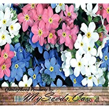 BIG PACK x (10,000+) MIXED Pink White Blue FORGET ME NOT Seeds - Myosotis seed