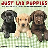 Just Lab Puppies 2019 Wall Calendar (Dog Breed Calendar)