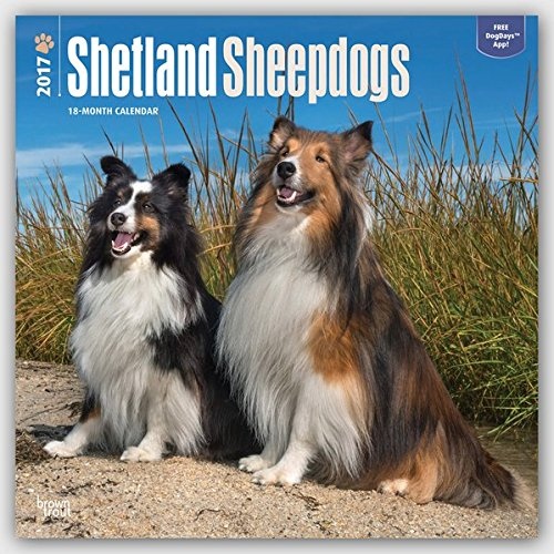 Shetland Sheepdogs 2017 Square (Multilingual Edition)