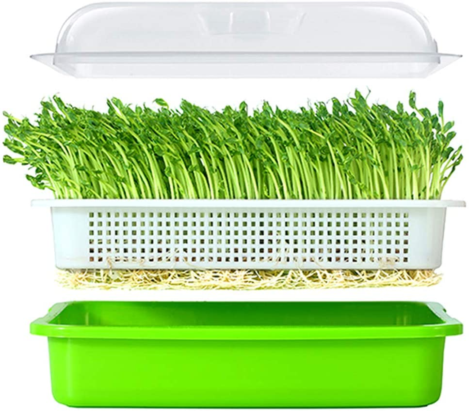 Seed Sprouter Tray BPA Free PP Soil-Free Big Capacity Healthy Wheatgrass Grower with Lid Sprouting Kit 13.4×9.84×4.72 inches LxWxH