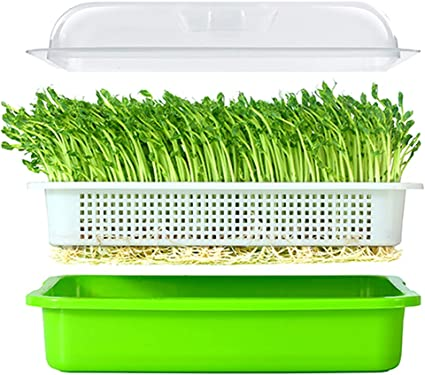Lejoy Garden Seed Sprouter Tray Bpa Free Pp Soil Free Big Capacity Healthy Wheatgrass Grower With Lid Sprouting Kit 13 4x9 84x4 72 Inches Lxwxh Garden Outdoor