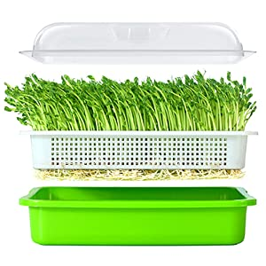 Seed Sprouter Tray BPA Free PP Soil-Free Big Capacity Healthy Wheatgrass Grower with Lid Sprouting Kit 13.4x9.84x4.72 inches(LxWxH)