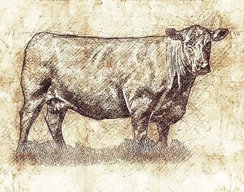 Red Cow Print - Angus Cow Decor -11 x 14 Unframed Print - Art Wall Decor