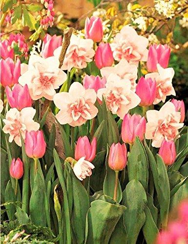 Pink Spring Bulbs