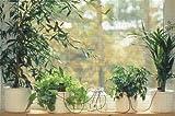 Blumat Classic (Jr.) Automatic Plant Watering